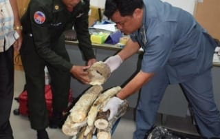 Ivory Smuggler Arrested in Cambodia Ivory Smuggler Arrested in Cambodia Ivory Smuggler Arrested Cambodia 320x202