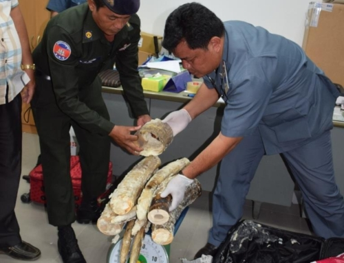 Ivory Smuggler Arrested in Cambodia