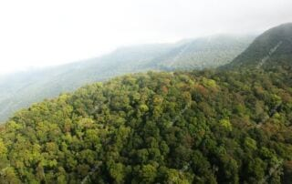 Saving the Cardamoms Cardamom Mountains RainForest 320x202