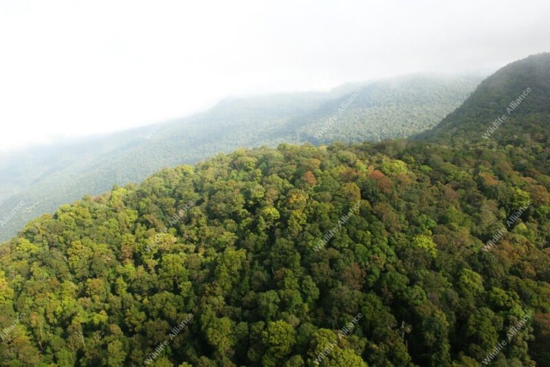 Saving the Cardamoms Cardamom Mountains RainForest 800x534