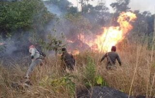 Rangers from Trapeang Rung station cleared heavy forest fire Wildlife Alliance Forest Fire 320x202