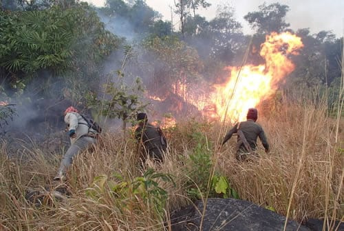 Rangers from Trapeang Rung station cleared heavy forest fire Rangers from Trapeang Rung station cleared heavy forest fire Wildlife Alliance Forest Fire