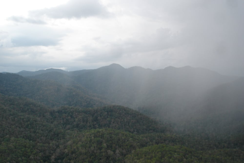 southern cardamom forest registered as a national park! Southern Cardamom Forest Registered as a National Park! Southern Cardamom Forest landskape
