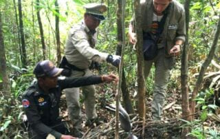 Profits from Nature Dead civet trapped in snares 320x202