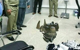 Up to $7 Million in Rhino Horn Seized at Airport Up to $7 Million in Rhino Horn Seized at Airport Rhino Horn Seized at Airport cambodia 1 320x202
