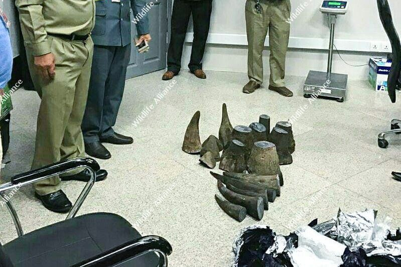 Up to $7 Million in Rhino Horn Seized at Airport Up to $7 Million in Rhino Horn Seized at Airport Rhino Horn Seized at Airport cambodia 1