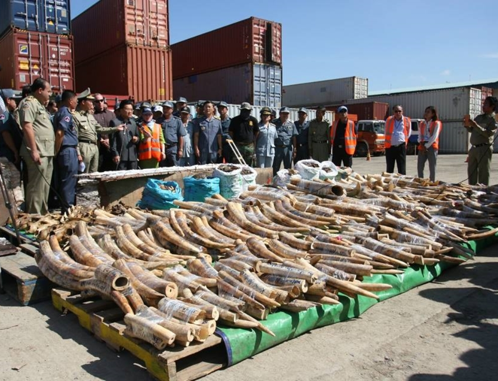 Cambodia Busts Major Ivory Smuggling From Mozambique to China