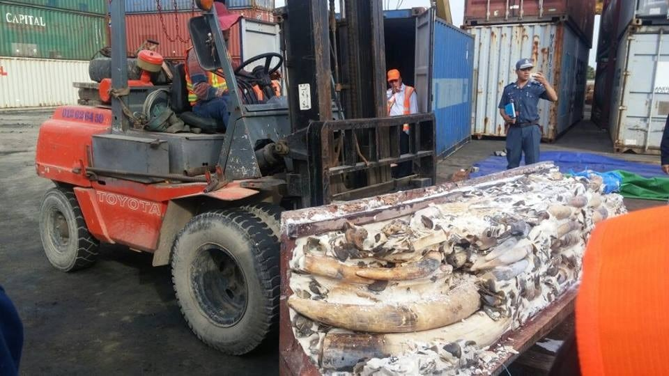 Cambodia Busts Major Ivory Smuggling From Mozambique to China Cambodia Busts Major Ivory Smuggling From Mozambique to China 1