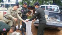 Bushmeat Seized From Stung Treng City Market Wildlife Alliance Bushmeat Seized 200x113