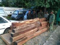 Chambok ranger station confiscated 18 pieces (1.85m3) of luxury wood worth thousands of dollars Wildlife Alliance Ranges confiscated luxury wood 200x150