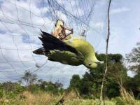Wildlife Alliance Rangers Dismantled 93 Snares Bird net Snares 200x150