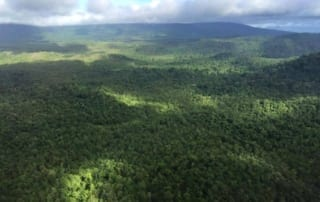 new carbon credit deal will protect the southern cardamom rainforest New Carbon Credit Deal will Protect the Southern Cardamom Rainforest Protect the Southern Cardamom Rainforest 320x202
