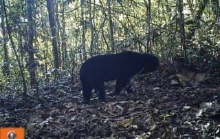 Exciting Results from a Camera Trap Survey! Exciting Results from a Camera Trap Survey! Camera Trap Survey sun bear 320x202