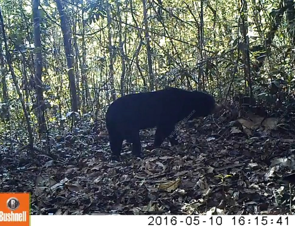 Exciting Results from a Camera Trap Survey!