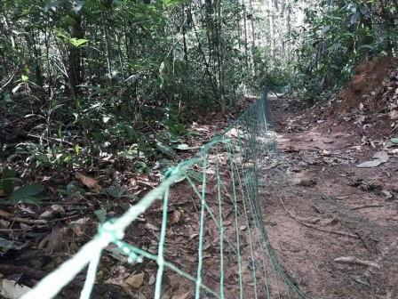 Wildlife Alliance rangers dismantle line nets Wildlife Alliance Rangers dismantle line nets