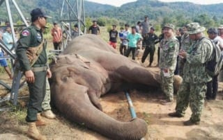 Wildlife Alliance held a funeral for the dead elephant Wildlife Alliance held a funeral for the dead elephant electrocuted elephant Cambodia Wildlife Alliance 320x202