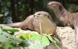 Waterfall for World Otter Day 2017 World Otter Day 2017 320x202  Wildlife Care World Otter Day 2017 320x202
