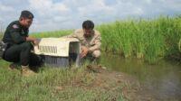 Wildlife Police WRRT1 200x112