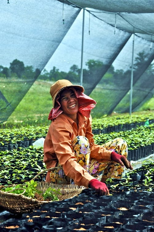 community livelihoods Community Livelihoods liveli 2