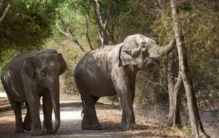 Celebrating Successes on World Elephant Day World Elephant Day 320x202