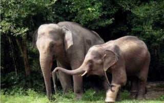 Elephant Appreciation Day September 22 Elephant Appreciation Day 320x202  Newsletter Elephant Appreciation Day 320x202