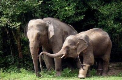 Elephant Appreciation Day September 22 Elephant Appreciation Day 400x262  Home Elephant Appreciation Day 400x262