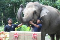 lucky recently celebrated her 18th birthday party Lucky recently celebrated her 18th birthday party Happy birthday Lucky The elephant eating 200x133