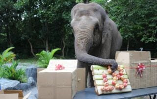 Lucky recently celebrated her 18th birthday party Happy birthday Lucky enjoing apples 1 320x202  Wildlife Care Happy birthday Lucky enjoing apples 1 320x202