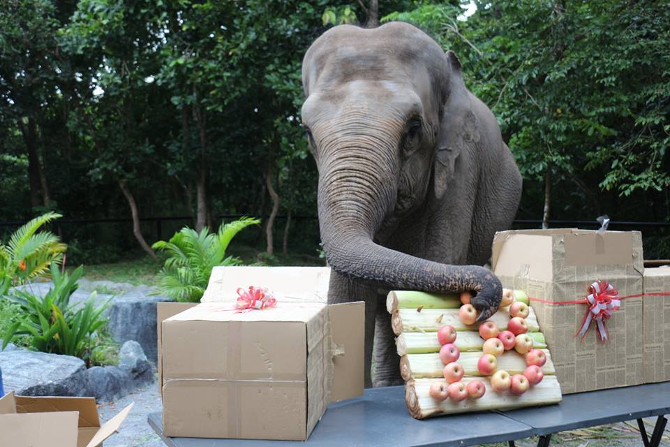 lucky recently celebrated her 18th birthday party Lucky recently celebrated her 18th birthday party Happy birthday Lucky enjoing apples 1