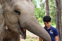 Phnom Tamao Wildlife Rescue Center team Phnom Tamao Wildlife Rescue Center team Phnom Tamao Wildlife Rescue Center team Love for Elephants 200x133