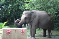 lucky recently celebrated her 18th birthday party Lucky recently celebrated her 18th birthday party The elephant gift 200x133