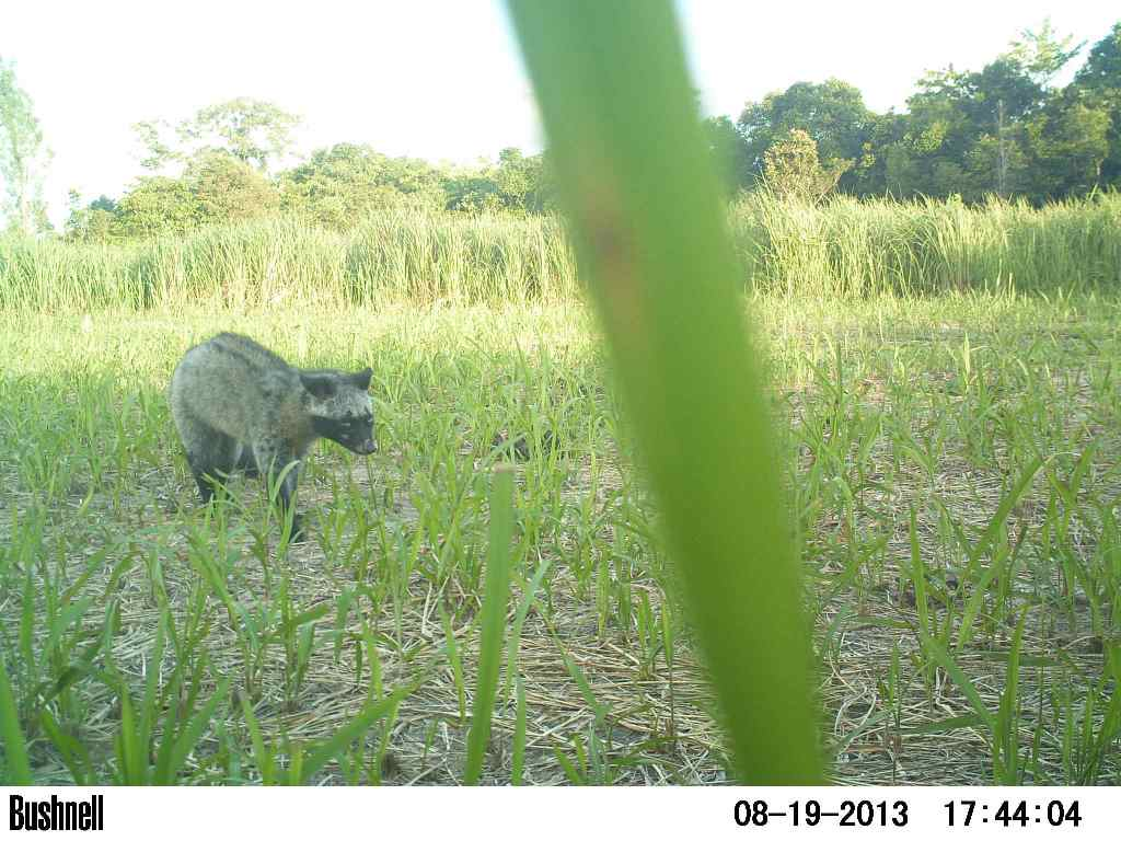 VOTE - Sustainable livelihoods and tourism VOTE – Sustainable livelihoods and tourism Caamera trap civet