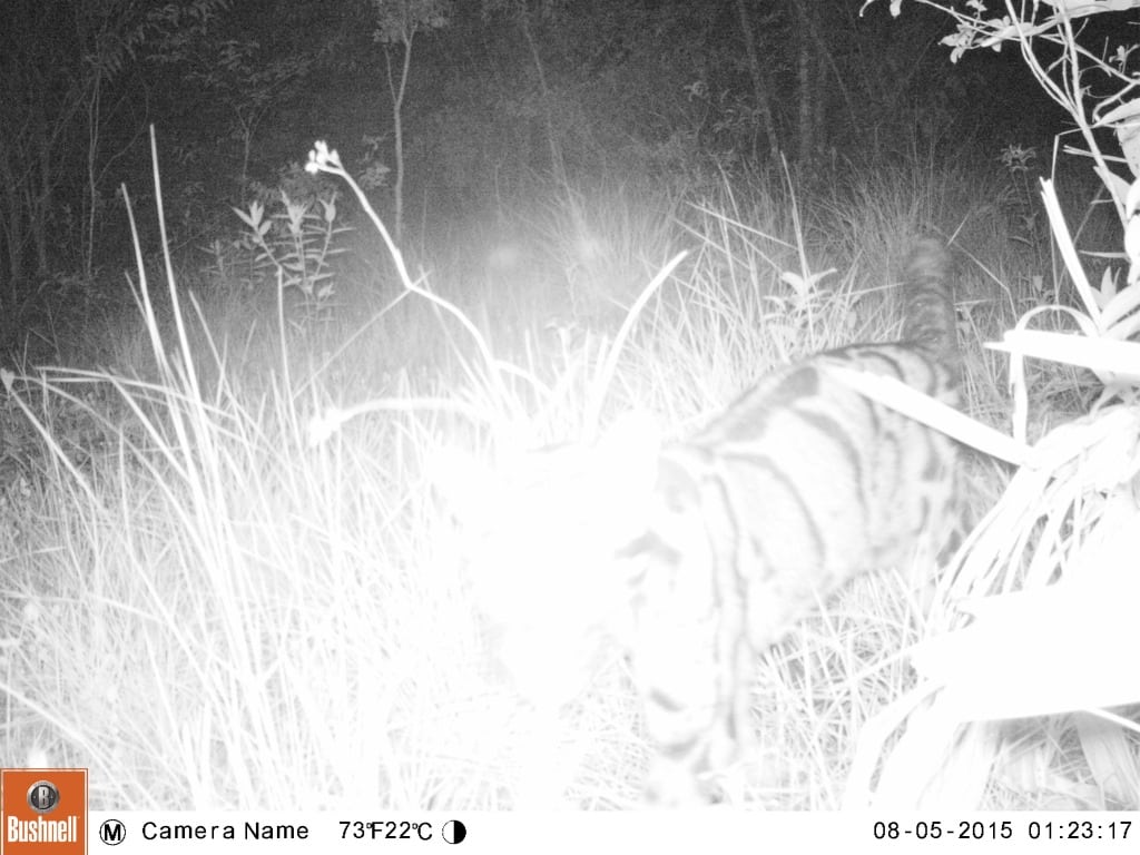 VOTE - Sustainable livelihoods and tourism VOTE – Sustainable livelihoods and tourism Camera trap clouded leopard