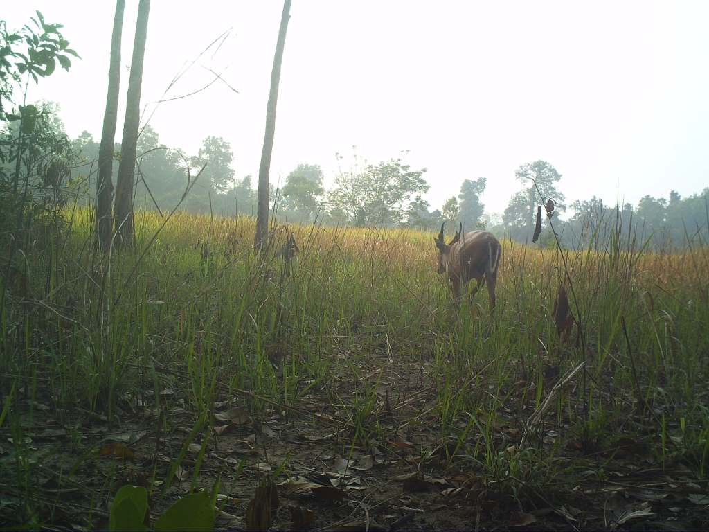 VOTE - Sustainable livelihoods and tourism VOTE – Sustainable livelihoods and tourism Camera trap muntjac
