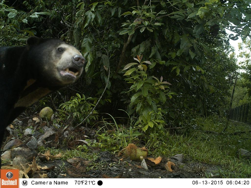 VOTE - Sustainable livelihoods and tourism VOTE – Sustainable livelihoods and tourism Camera trap sun bear