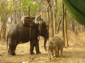 chhouk – the story continues… Chhouk – the story continues… Chhouk with forest patrol elephant