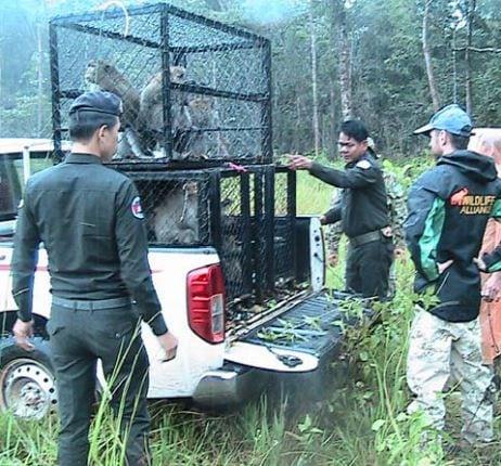 wildlife rapid rescue team – disparate duties… Wildlife Rapid Rescue Team – disparate duties… Macaque release by WRRT