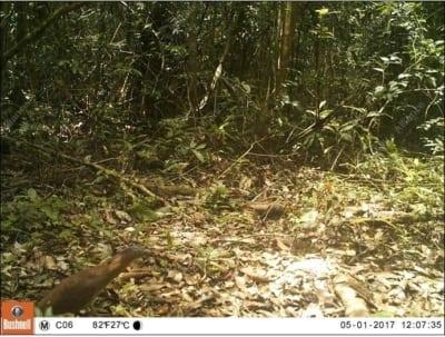 southern cardamom redd+ Southern Cardamom REDD+ Malayan Night Heron 400x303