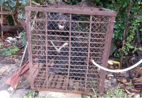 wildlife rapid rescue team – disparate duties… Wildlife Rapid Rescue Team – disparate duties… Sun bear in cage