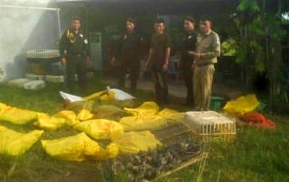 Wildlife seized in Prey Veng Wildlife seized in Prey Veng Wildlife Alliance Wildlife sized 320x202