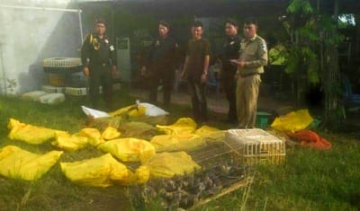Wildlife seized in Prey Veng Wildlife Alliance Wildlife sized 400x235  Home Wildlife Alliance Wildlife sized 400x235