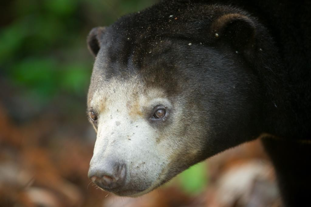 VOTE - Sustainable livelihoods and tourism VOTE – Sustainable livelihoods and tourism sun bear