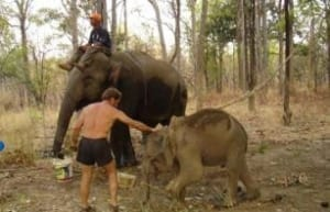 chhouk – the story continues… Chhouk – the story continues… the little elephant 300x193