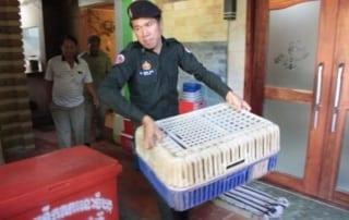Wildlife seized from restaurant in Pursat raid. WRRT Update Wildlife seized from restaurant in Pursat raid. WRRT Update wildlife rescued Cambodia 320x202