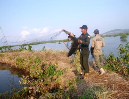 Dr. Thomas Gray – The wildlife snaring crisis