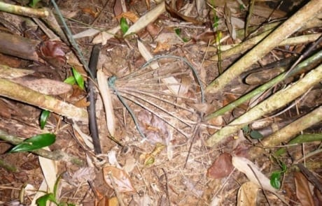 Wildlife traps removed from the forest floor wildlife snaring crisis 7 460x295