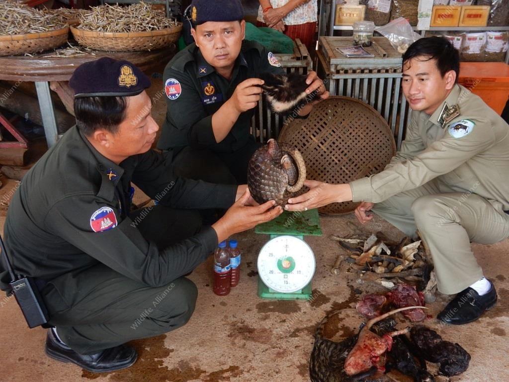 Animal police Wildlife Rapid Rescue Team conducted a suspenseful