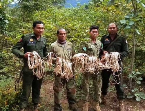 Chambak Patrol Station – 5 chainsaws and 131 rope snares