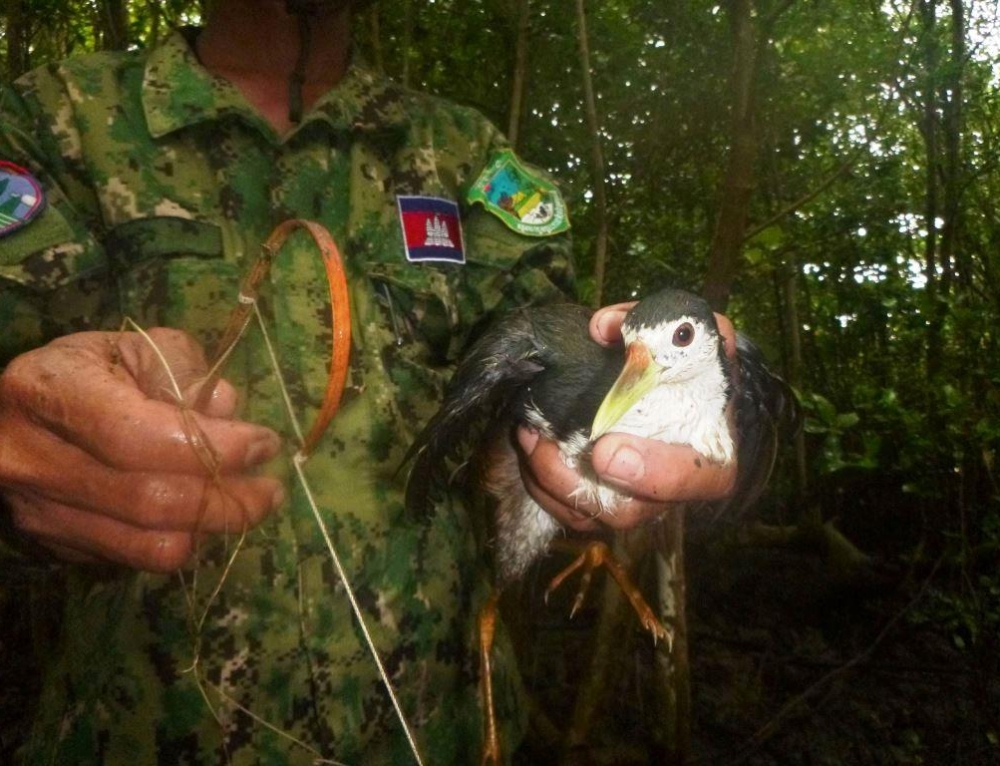Thousands of bird traps, rope snares and plastic nets