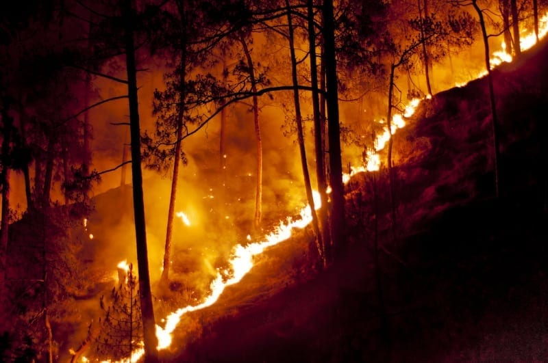 Intervention, a waste of time? Intervention, a waste of time? Forest Fire Cambodia Wildlife Alliance 800x531